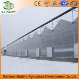 Polycarbonate Sheet PC Used Commercial Growing Greenhouse for Vegetables