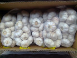 Garlic Hometown Jinxiang County The Best Quality