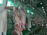China Supplier Slaughtering Equipment Cattle Ox Sheep Goat Pork Pig Tripe Belly Omasum Cleaning Machine