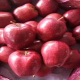 Good Quality Fresh Red Delicious Apple, Huaniu Apple