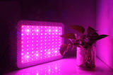 Free Shipping The Cheapest LED Grow Light for Wholesales