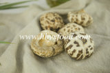 Bulk Dried White Flower Mushroom Dehydrated Vegetable