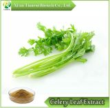 Natural Celery Leaf Power Extract /Apigenin Celery Leaf P. E.