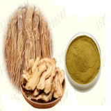 100% Pure Natural Angelica Root Extract Powder
