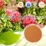 Manufacturer Supply Material Rhodiola Rosea Extract for Cosmetic