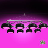 2000W Reduce Planting Costs for Medical Herbs with PAR LED Grow Light for Greenhouse