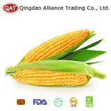 IQF Sweet Corn Cobs with Good Price