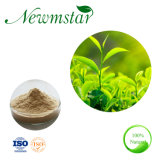 Natural Pure Green Tea L Theanine Extract 10%-99% for Calm