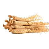 Natural Plant Extract Gingseng Extract Powder From China Supplier
