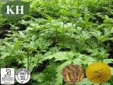 100% Natural Coptis Chinensis Extract Berberine 5%, 10% HPLC