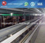 Lower Price 4/5/6 Tiers Automatic Poultry Equipment to Chicken Farm