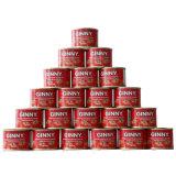 Wholesale Tomato Paste Suppliers Ginny Brand Tomato Paste