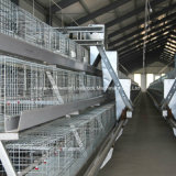 High Quality Best Price Broiler Chicken Cage Equipment