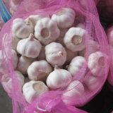 New Crop Fresh White Garlic at Wholesale Price