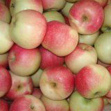 Small Size (150-216#) Red Gala Apple for Bangladesh Market