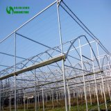 Agriculture Greenhouse Galvanized Steel Structure