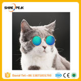 1PC Lovely Pet Cat Glasses Dog Glasses Pet Products for Little Dog Cat Eye-Wear Dog Sunglasses Photos Pet Accessoires