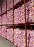 Wholesale Chinese Normal White Garlic