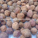 Factory Supply GMP Authentic Dried Yang Chun Amomum Villosum Fruit/Villous Amomum Fruit