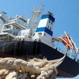 Sea Shipping Freight Agent From Shanghai/Ningbo/Tianjin to Belawan/Bintulu/Haiphong/Kuantan/Laem Chabang