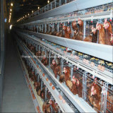 Large-Scale Farm Used a Frame Poultry Battery Chicken Cage