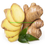Good Prices Professional Factory Natural Dry Ginger