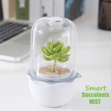 New Smart All in One LED Grow Lamp