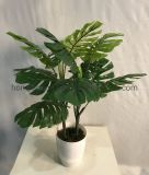 Simulation of Turtle Back Artificial Plant Handmade Crafts