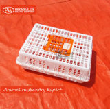 Best Price Poultry/Chicken Transport Box/Used Poultry Cage
