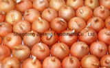 Competitive Fresh Yellow Onion with Good Price
