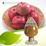Apple Extract Natural Apple Polyphenols Powder Food Application