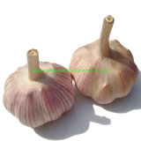 New Crop Organic Fresh Pure White Garlic