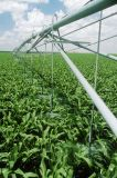 Fixed Center Pivot Irrigation System for Large Farm