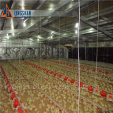 Qingdao Poultry House Steel Structure Chicken