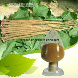 Arctiin/10-40% Natural Burdock Seed Extract