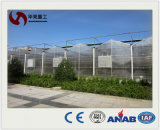 Transparent Polycarbonate Corrugated Commercial Used PC Sheet Greenhouse