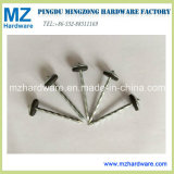 "Bwg9*2.5"" Umbrella Head Roofing Nail to Tanzania"