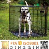 Border Collie Wirehouse Cage for Dog