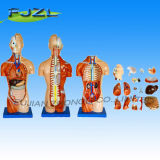 42cm Sexless Torso 18 Parts