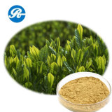 Medicine Tea Polyphenol for Reduce Blood Pressure