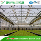 Arch Type Steel Structure Poly Film/PC Sheet Covered Greenhouse for Vegetables/Flowers/Fruits/Experiment/Eco Restaurant