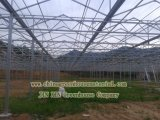 Plastic Film Greenhouse for Agriculture Growing