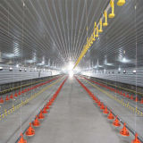 Welded H Steel Frame Chicken House for Poultry Farm