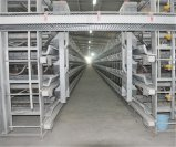 H Type Best Price Good Quality Poultry Farm Layer Egg Chicken Cage Equipment