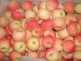 Red Color Fresh Gala Apple From China