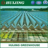 Agricultural Vegetable Tunnel Multi-Span Plastic/Polycarbonate Sheet PC/Hydroponic Venlo Glass/Greenhouse for Farming Agriculture /Vegetables/Flowers/Tomato