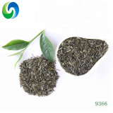 Factory Price Cheap and High Quality Green Tea 9366 Chunmee Tea
