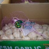 New Crop Fresh Pure White Garlic