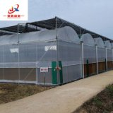 Film Greenhouses for Agriculture