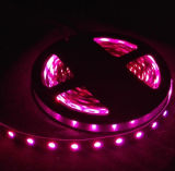 Cheaper Price DC12V SMD5050 LED Ribbon Strip Lighting (RED/Green Color 14.4W/M)